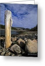 Acadia National Park - Maine Usa Greeting Card