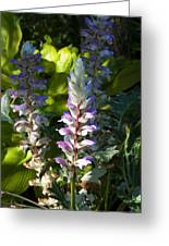 Acanthus Flower Greeting Card