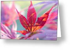 Acer Beautiful Fall Greeting Card