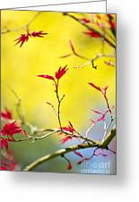 Acer Colour Greeting Card by Tim Gainey