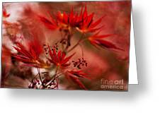 Acer Storm Greeting Card