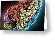 Acetylcholine Receptor Molecule Greeting Card