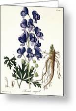 Aconitum Napellus Greeting Card