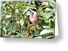 Acrobird Greeting Card