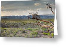 Across A Great Wilderness Greeting Card