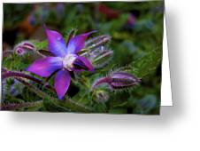 Act Of Violet Greeting Card