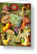 Actinia Sea Creatures Greeting Card