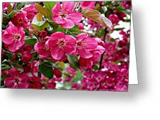 Adams Crabapple Blossoms Greeting Card