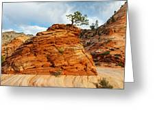 Adaptable Pinyon Pine Greeting Card