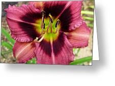 Addie Branch Smith Daylily Greeting Card