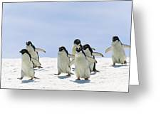 Adelie Penguin Group Running Antarctica Greeting Card