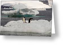 Adelie Penguins On Ice Greeting Card