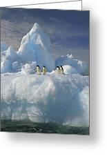 Adelie Penguins On Iceberg Antarctica Greeting Card