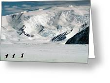 Adelie Penguins Trekking On The Ice Greeting Card