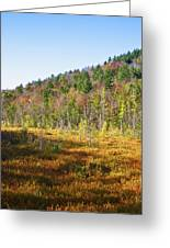 Adirondack Color Vi Greeting Card