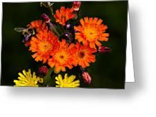 Adirondack Flowers Greeting Card