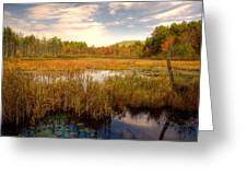 Adirondack Pond Greeting Card