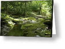 Adirondack Stream Greeting Card