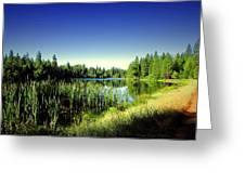 Admiring The Beauty At Woodbridge Lake Greeting Card