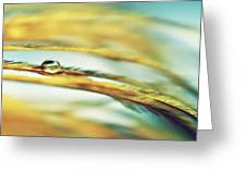 Adopt The Pace Of Nature- Feather Photograph Greeting Card