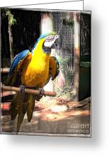 Adopted Macaw - Rescued Parrot Greeting Card