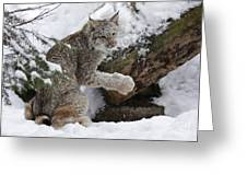 Adorable Baby Lynx In A Snowy Forest Greeting Card