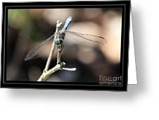 Adorable Dragonfly With Border Greeting Card