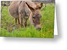 Adorable Mini-burro Greeting Card
