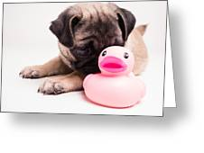 Adorable Pug Puppy With Pink Rubber Ducky Greeting Card