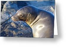 Adorable Sealion Greeting Card