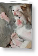 Adorable Siblings  Greeting Card