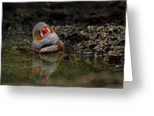 Adorable Zebra Finch Taking A Bath Greeting Card