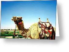 Adorned Camel Greeting Card