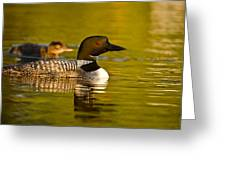 Adult And Chick Loon Pictures 2  Greeting Card