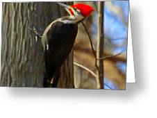 Adult Male Pileated Woodpecker Greeting Card