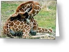 Adult Reticulated Giraffe Greeting Card