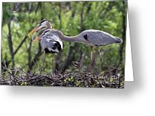 Affectionate Great Blue Heron Mates Greeting Card
