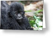 Africa, Rwanda, Volcanoes National Park Greeting Card
