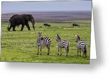 Africa Tanzania African Elephant Greeting Card
