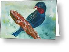 #african Bluebird Greeting Card