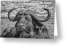 African Buffalo V4 Greeting Card