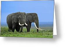 African Bull Elephants In Rain Endangered Species Tanzania Greeting Card