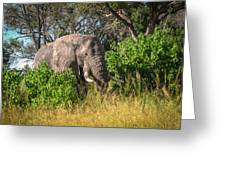 African Bush Elephant Greeting Card