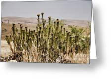 African Bushland Greeting Card