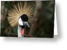 African Crowned Crane 1 Greeting Card