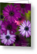 African Daisy Collage Greeting Card