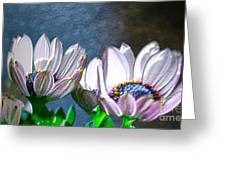 African Daisy Detail Greeting Card
