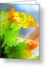 African Daisy I - Digital Paint Greeting Card