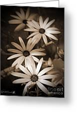African Daisy Named African Sun Greeting Card