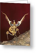 African Devil Mantis Greeting Card